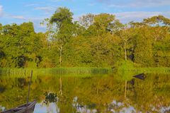 Amazon Jungle. Panoramic view taken in the Amazon Stock Images