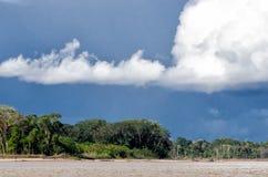 Amazon. Jungle at the amazon in Peru royalty free stock photos