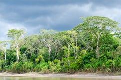 Amazon. Jungle at the amazon in Peru stock image