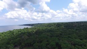 The Amazon Jungle and the Rio Negro in Amazon, Brazil stock footage