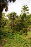 Amazon jungle tree Stock Images