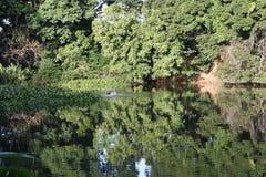 Amazon lake Royalty Free Stock Photos