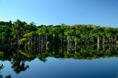 Amazon lake. Lake located at Itacoatiara city. Amazon Forest. Amazonas Estate, Brazil Royalty Free Stock Photo