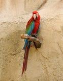 Amazon parrot Royalty Free Stock Photography