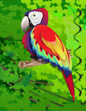 Amazon parrot. Parrot sitting on a branch in a tropical forest Stock Images