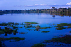 Amazon Rain Forest Blue Hour Royalty Free Stock Photography