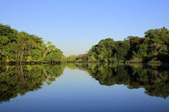 Amazon Rainforest. The Amazon Rainforest with Blue Sky and Mirror Reflections in the Water. Amazonas, Brazil royalty free stock photography