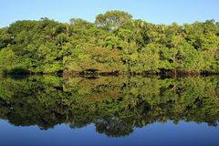 Amazon Rainforest. The Amazon Rainforest and Blue Sky Perfectly Mirrored in the Water. Amazonas, Brazil stock images