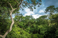Amazon Rainforest, Brazil, South America.  Royalty Free Stock Photography