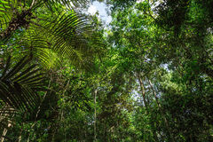 Amazon Rainforest, Brazil, South America Royalty Free Stock Photo