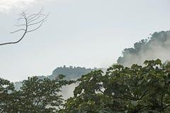 Amazon rainforest Royalty Free Stock Images