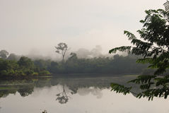 Amazon rainforest: Landscape along the shore of Amazon River near Manaus, Brazil South America Stock Photography