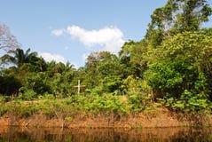 Amazon rainforest: Landscape along the shore of Amazon River near Manaus, Brazil South America Royalty Free Stock Photography