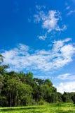 Amazon Rainforest Landscape Stock Photo