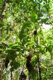 Amazon rainforest: Nature and plants along the shore of Amazon River near Manaus, Brazil South America Stock Photo