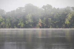 Amazon Rainforest, Peru, South America Royalty Free Stock Images