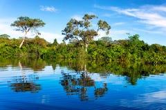 Amazon Rainforest Reflection Royalty Free Stock Image