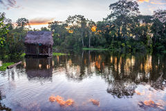 Amazon Rainforest at Sunset Stock Photos
