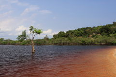 Amazon River Stock Photography
