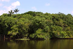Amazon River Royalty Free Stock Image