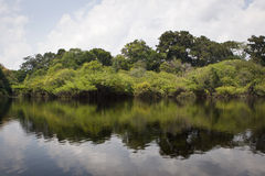 Amazon River Royalty Free Stock Photo