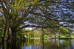 Amazon River. Brasilien Arkivfoton