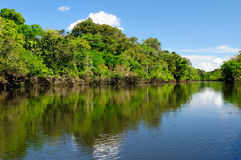 Amazon river landscape in Brazil. Amazonas landscape. The photo present  Amazon river, Brazil Royalty Free Stock Photography