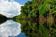 Amazon river landscape in Brazil. Amazonas landscape. The photo present  Amazon river, Brazil Stock Image