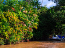 Amazon river. Typical scene of the Amazon River - Brazil stock image