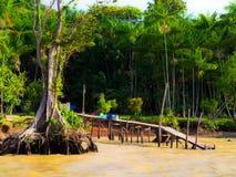 amazon rzeki zdjęcie royalty free