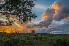 Amazon savannah in the peruvian Amazon jungle at Madre de Dios stock photo