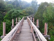 Amazon Trail Ecotourism Forest. Amazon elevated trail path ecotourism forest, Brazil royalty free stock photography