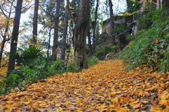 Mountain trail. Path covered with fallen leaves Royalty Free Stock Photos