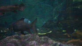 Amazon underwater biotope stock footage