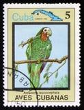 Amazona leucocephala, das Reihe ` kubanische Vögel `, circa 1983 Lizenzfreie Stockfotografie