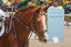 A amazona senta-se a cavalo esperando a competição começar no fundo dos anfiteatros do estádio Imagem de Stock