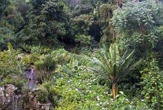 amazonas森林雨 免版税库存图片