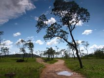 Amazonas风景视图 免版税库存图片