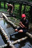 Amazonas - Перу Стоковые Фотографии RF