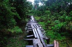 Amazonas -秘鲁 库存照片