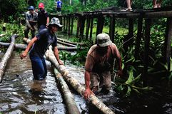 Amazonas -秘鲁 免版税库存图片