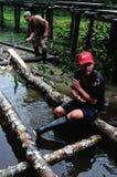 Amazonas -秘鲁 免版税库存照片
