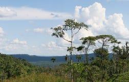 Amazonas-Bassin stockfotos