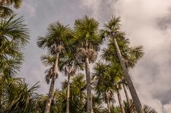Amazonas-Dschungel Stockfotos