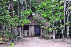 Amazonas-Dschungel-Haus Lizenzfreies Stockfoto