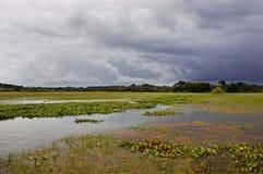Amazonas-Gebiet - das Curiau APA Lizenzfreie Stockfotos