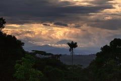 Amazonas-Gebiet Dschungel stockfoto