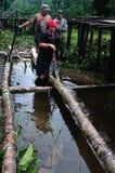 Amazonas - le Pérou Image libre de droits