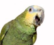 Amazonas-Papagei Stockbilder