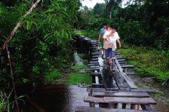 Amazonas - Peru Royaltyfria Bilder
